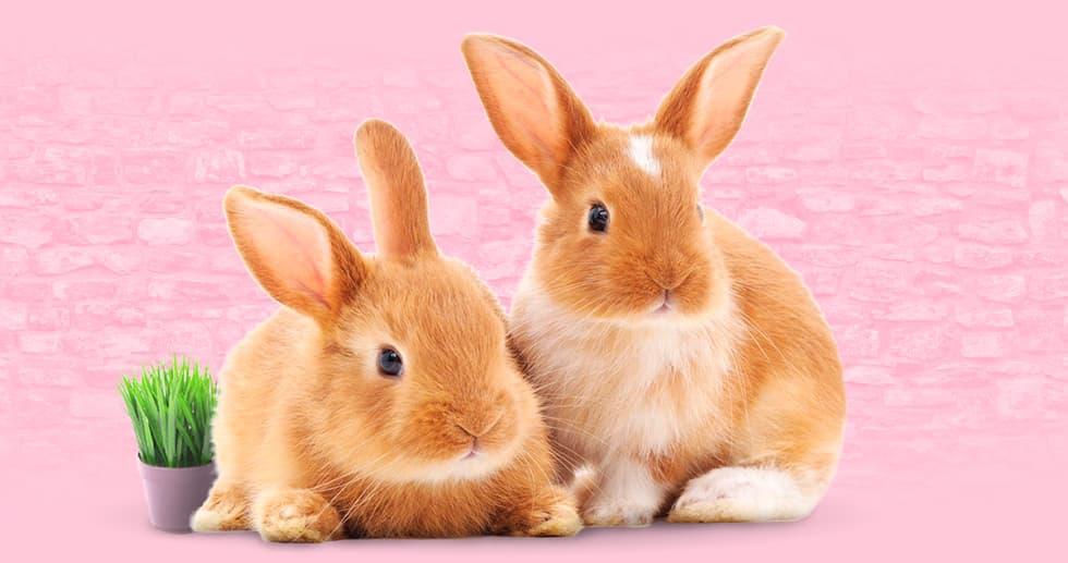 Первое антикафе с кроликами в России – сфотографируйтесь и покормите пушистых крох